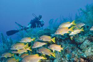 Experiencia de buceo, Playa Coral y Cueva de Saturno, Varadero